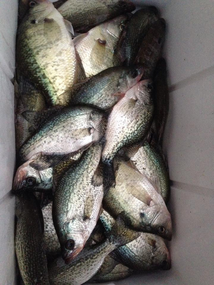 33 Crappie Caught at Lake Eddins
