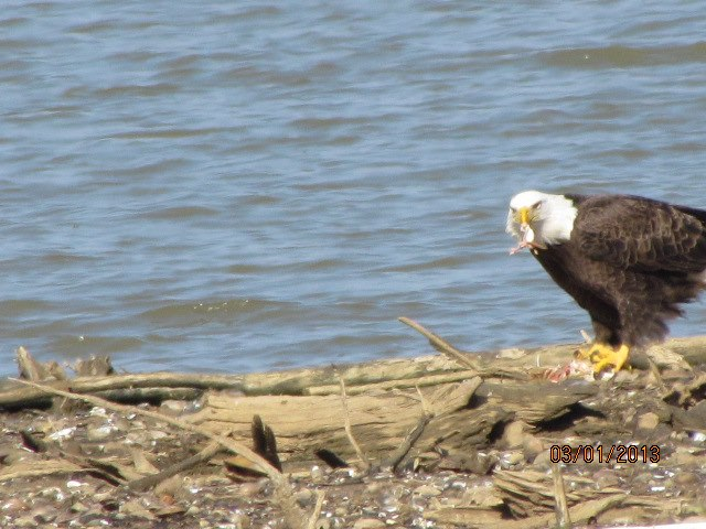 American Eagles at Lake Eddins MS!